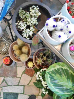 Royal Bloom plants