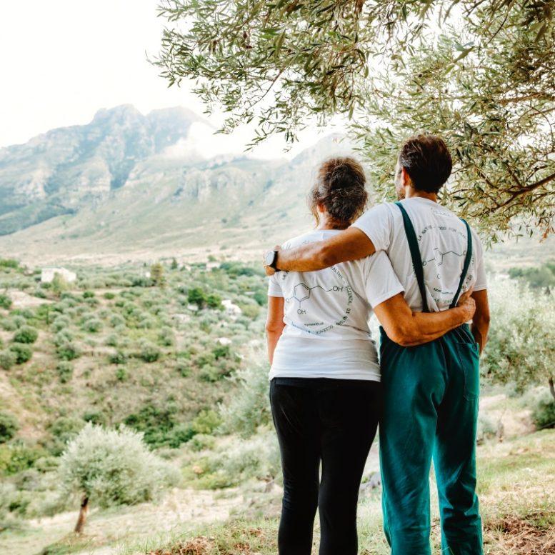 Sicily Olive Grove